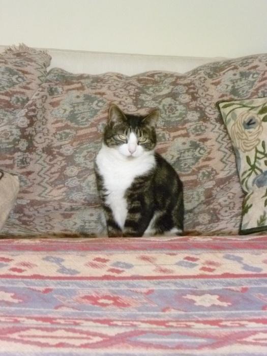 Dear Tia, what a lovely mellow cat!